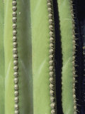 A Close, Detailed View of a Cactus Photographic Print by Bill Curtsinger