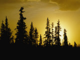 Fir Trees Silhouetted in Early Morning Sunlight at Nabesna Photographic Print by George F. Mobley