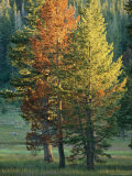 Trees Bearing the Colors of Fall Photographic Print by Raymond Gehman