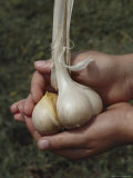 Garlic Cloves Photographic Print by Sam Abell