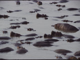 Hippos in the Water Photographic Print by Michael Nichols