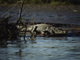 A Crocodile Lazes on a Sandbar Photographic Print by Sam Abell