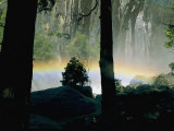 A Rainbow Rises Above the Mist in the Woods Photographic Print by Marc Moritsch