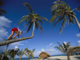 A Woman Climbs a Palm Tree for Some Coconuts Fotografická reprodukce