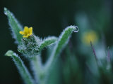 Close up of a Flower with Dew on its Leaves Photographic Print by Annie Griffiths