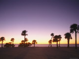 Sunset and Silhouetted Palm Trees Photographic Print by Richard Nowitz