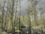 A Canoeist Paddles Through a Cypress Swamp Photographic Print by Annie Griffiths