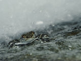 A Rain Forest Frog on a Rock Photographic Print by Mattias Klum