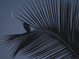 A Night View of an Egret Resting on a Palm Frond in the Light of the Moon Photographic Print by Bill Ellzey