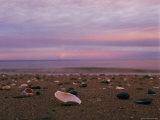 Shells Litter a Beach Photographic Print