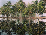 Palm Trees Reflected in the Water Photographic Print