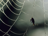 Insect in a Spiderweb Covered in Dew Photographic Print by Dick Durrance II