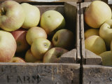 Close View of Fresh Apples at the Dupont Circle Farmers Market Photographic Print by Stacy Gold