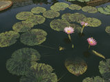 Lilies in a Pond Photographic Print by Amy & Al White & Petteway