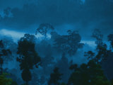 Twilight View of the Rain Forest Photographic Print by Mattias Klum