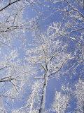 Vlad Kharitonov - Snow-Covered Trees - Fotografik Baskı
