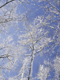Snow-Covered Trees Photographic Print by Vlad Kharitonov