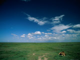 Lion Resting on the Vast Savanna Photographic Print by Beverly Joubert