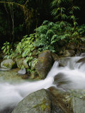 Time Exposure of a Little Brook Flowing over Rocks in a Rain Forest Photographic Print by Mattias Klum