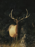 Portrait of a Bull Elk with Large Antlers Photographic Print