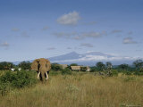 An African Elephant Feeds in a Field Close to a Native Settlement Photographic Print by Dr. Maurice G. Hornocker