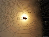 A Spider Web with a Trapped Insect Photographic Print by Joel Sartore