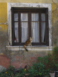 A Cat Sitting on an Exterior Window Sill in Tournus Photographic Print by Todd Gipstein