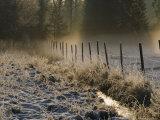 Winter Scene Photographic Print by Mattias Klum