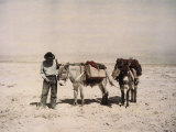 An Old Prospector with His Mules Photographic Print
