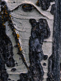 Close-up of Tree Bark Photographic Print by George F. Mobley