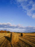 Golden Rolls of Hay in a Field under a Clouded Blue Sky Photographic Print by Mattias Klum