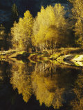 Autumn Trees Reflected in the Merced River Photographic Print by Marc Moritsch