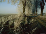 A Person Walks Past Frost Covered Plants and Trees Photographic Print by Sisse Brimberg