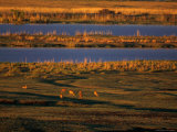 Animals Foraging on African Grasslands Photographic Print by Beverly Joubert