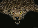The Head of a Leopard Skin Rug Photographic Print by Todd Gipstein