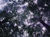 Sunlight Filters Through the Canopy of a Rain Forest Fotografisk tryk af Mattias Klum