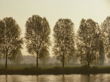 A Row of Poplar Trees Along the Banks of the Rhine River Photographic Print by Todd Gipstein