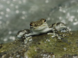 Frog on a Rock Photographic Print by Mattias Klum