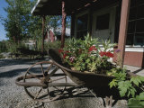 Flowers Bloom in an Old Wheelbarrow Photographic Print