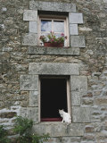 Cat in a Window in Brittany Photographic Print by Nicole Duplaix