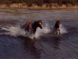 Chincoteague Ponies Splash Through the Flowing Water Photographic Print by Medford Taylor