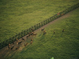Aerial View of a Herd of Horses in a Fenced-In Pasture Photographie par Dick Durrance II