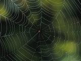 Spider Web, Australia Photographic Print by Darlyne A. Murawski