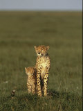 A Portrait of a Female Cheetah and Her Cub Photographic Print by Norbert Rosing
