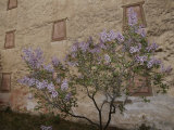 Potala Temple and Lilac Tree Photographic Print by Raymond Gehman