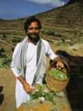 Portrait of a Man Holding a Basket Full of Capers Photographic Print by Ed George
