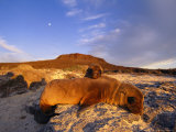 Sea Lion with Young, Galapagos Islands Photographic Print by Steve Winter