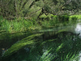 Aquatic Grasses Bend with the Flow of a Waterway Photographic Print