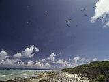 Sea Birds Fly over a Shore at Bikini Atoll Photographic Print by Bill Curtsinger