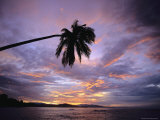 Overhanging Palm Tree is Silhouetted by a Sunset Sky Photographic Print by Steve Winter